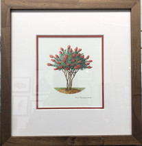 Crepe Myrtle 2 - NEW