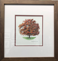 Oak Tree, Turner Family - NEW
