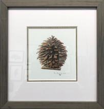 Pine Cone Original Framed