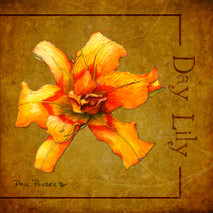 Wood Flower - Day Lily