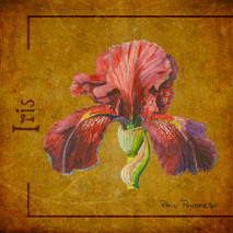 Wood Flower - Iris