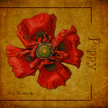 Wood Flower - Poppy