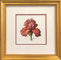 Red iris original 10x10 - SOLD