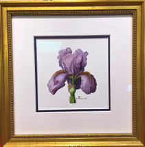Violet Iris original 10x10 - SOLD