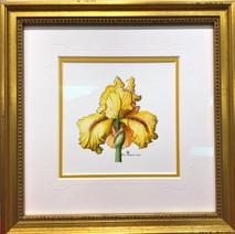 Yellow Iris original 10x10 SOLD