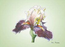 Iris 4 - 8x10 Green