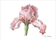 Iris 5 - 8x10 White
