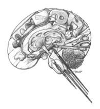 DS - Brain Right (8x10)