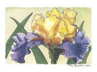 Iris Mini - Edith