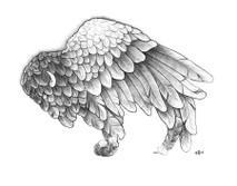 DS - Buffalo Wing (8x10)