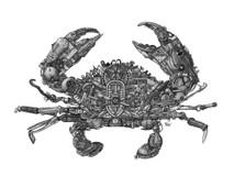 DS - EOD Crab