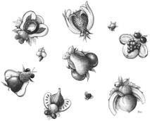 DS - Fruit Flies (8x10)