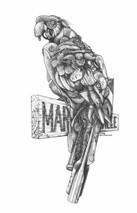 DS - Parrot (11x14)