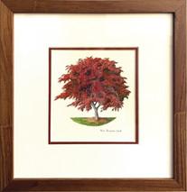 Ponder Japanese Maple - Original Framed