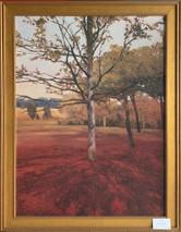 Item #48 - Noix - Kent Lovelace  (Originally $370.00)