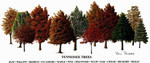 Tennessee Trees OE -Unframed 16x8 (retail $20)