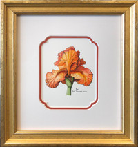 Iris Orange (Original ) Framed - SOLD