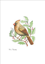 PP Cardinal Female