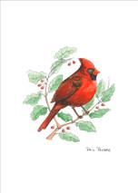 PP - Cardinal Male