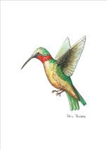 PP - Hummingbird 1