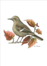 PP - Mockingbird