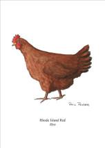 PP - Rhode Island Red Hen