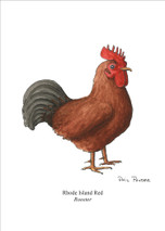 PP - Rhode Island Red Rooster