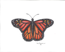 PP - Orange Monarch