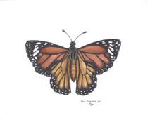 PP - Yellow Monarch