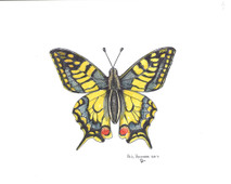 PP - Yellowtail