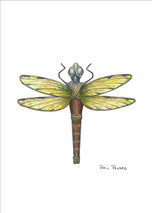 PP - Dragonfly