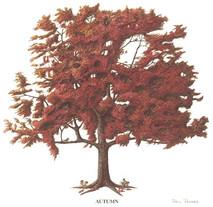 Tree - 4 Seasons - Autumn
