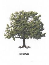 Tree - 4 Seasons - Spring