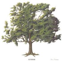 Tree - 4 Seasons - Summer
