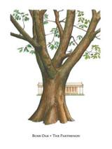 Tree Trunks - Parthenon