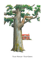 Tree Trunks - Tulip Grove
