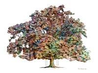 Turner Family Oak - Cane Ridge - multi color