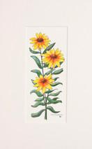 Spring Flowers 1 - 2012 (Original) unframed