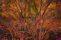 Kaleidoscope Tree