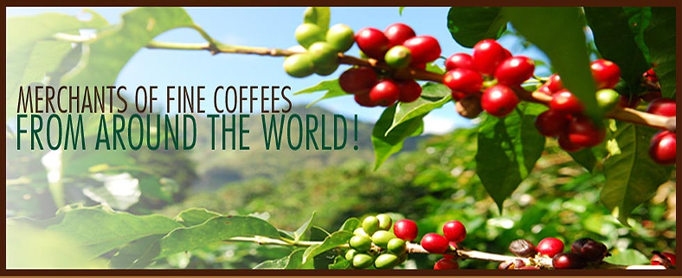 Merchants of Fine Coffees From Around the World