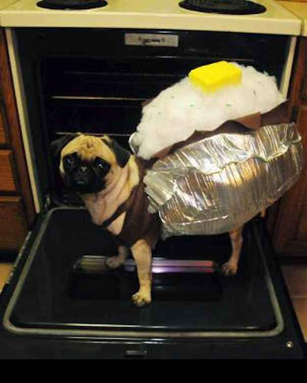Our 6 Favorite Dog Halloween Costumes Righteous Hound