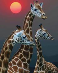 Giraffes - Premium Diamond Painting - Square - 50x60 - Free Shipping