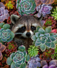 Raccoon and Succulents - Premium Diamond Painting - Square - 50x60 - Free Shipping