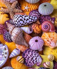Colorful Shells - Premium Diamond Painting - Square - 50x60 - Free Shipping
