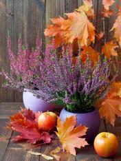 Autumn Colors - Premium Diamond Painting - Square - 55x70 - Free Shipping