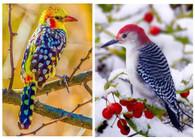 Birds Autumn and Winter - Pair (2) Premium Diamond Paintings - Round - 30x40 each - Free Shipping