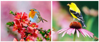 Birds Spring and Summer - Pair (2) Premium Diamond Paintings - Square - 30x40 each - Free Shipping
