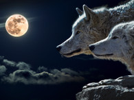 Wolves and the Moon - Premium Diamond Painting - Round- 50x60 - Free Shipping