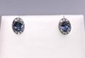 Montana Yogo Oval Sapphire & Diamond Halo Earrings 14K White Gold