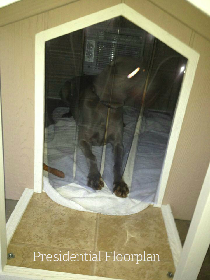 showing-a-dog-inside-the-door-pres.jpg